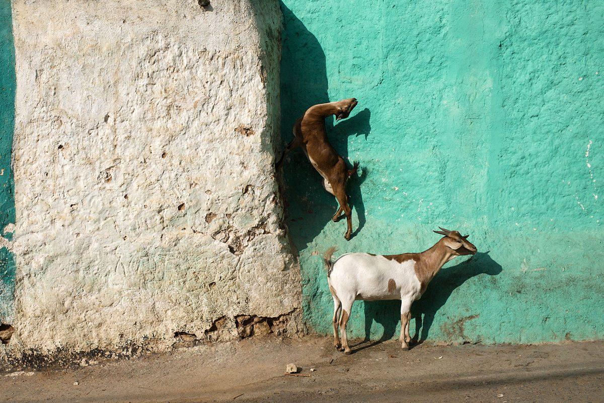 animals in Ethiopia Marika Poquet street photography
