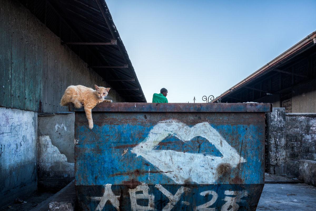 Let things happen cat on top of bin