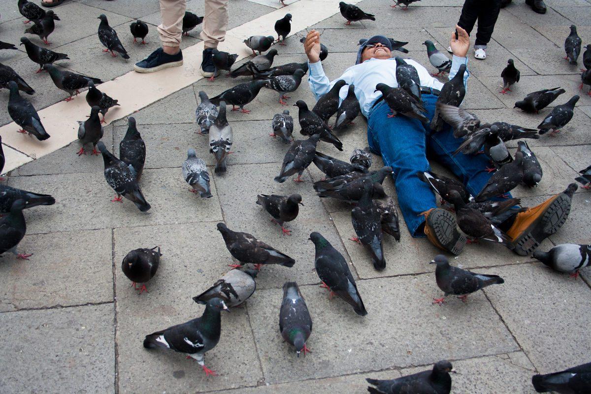 twenty-four hours sotterrato da piccioni