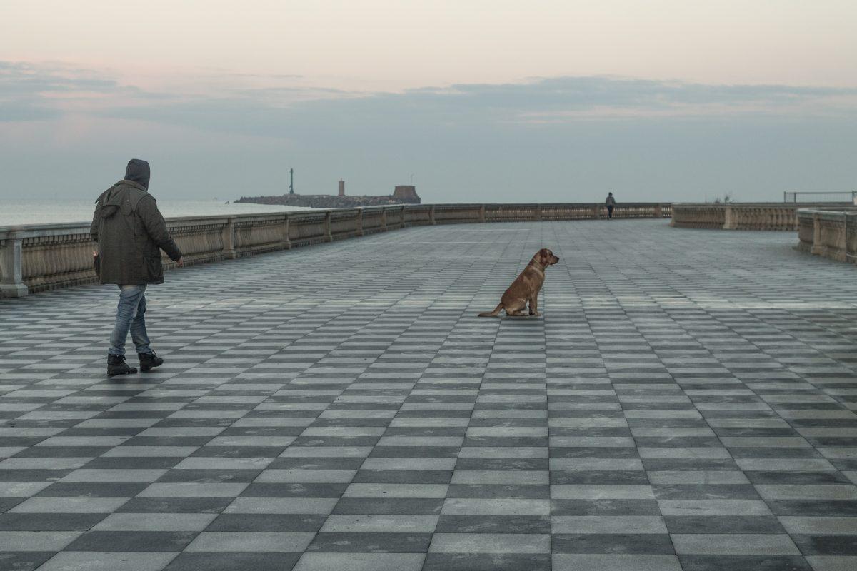 a dog alone