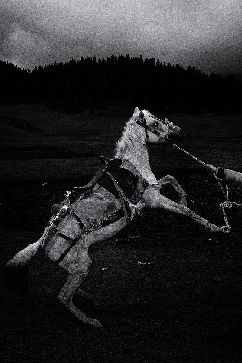 beyond street horse